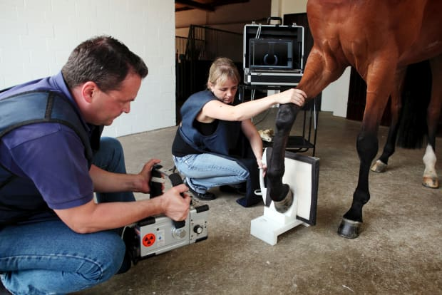 Equine pre purchase exam radiograph